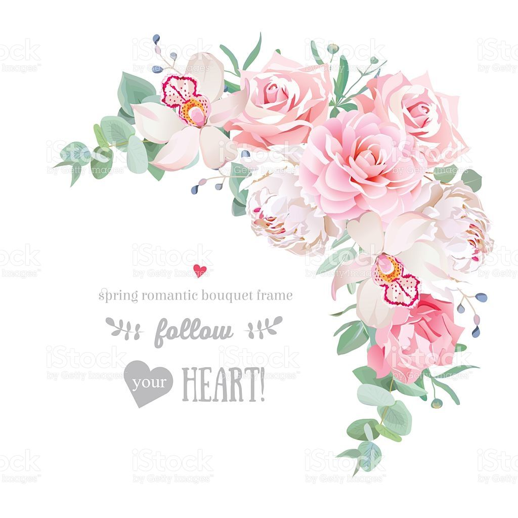 Delicate Floral Vector Frame With Peony Camellia Rose Orchid Carnation Royalty Free Stock Vector Art Flower Art Mint Flowers Orchid Flower