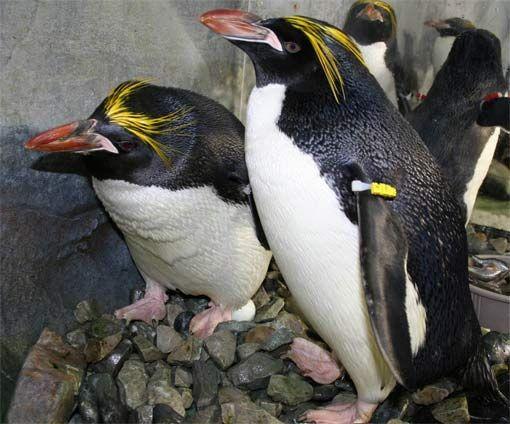 food please penguinos