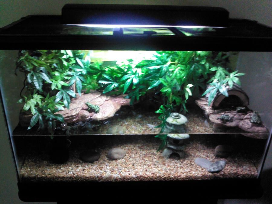 Pin by kari martz on fire bellied toads pinterest for Fish tank fireplace