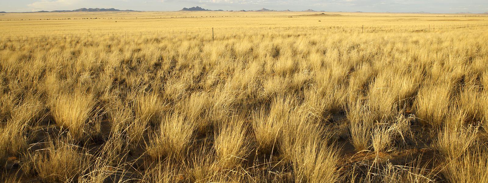 Grasslands Habitats WWF Grassland habitat, Grassland