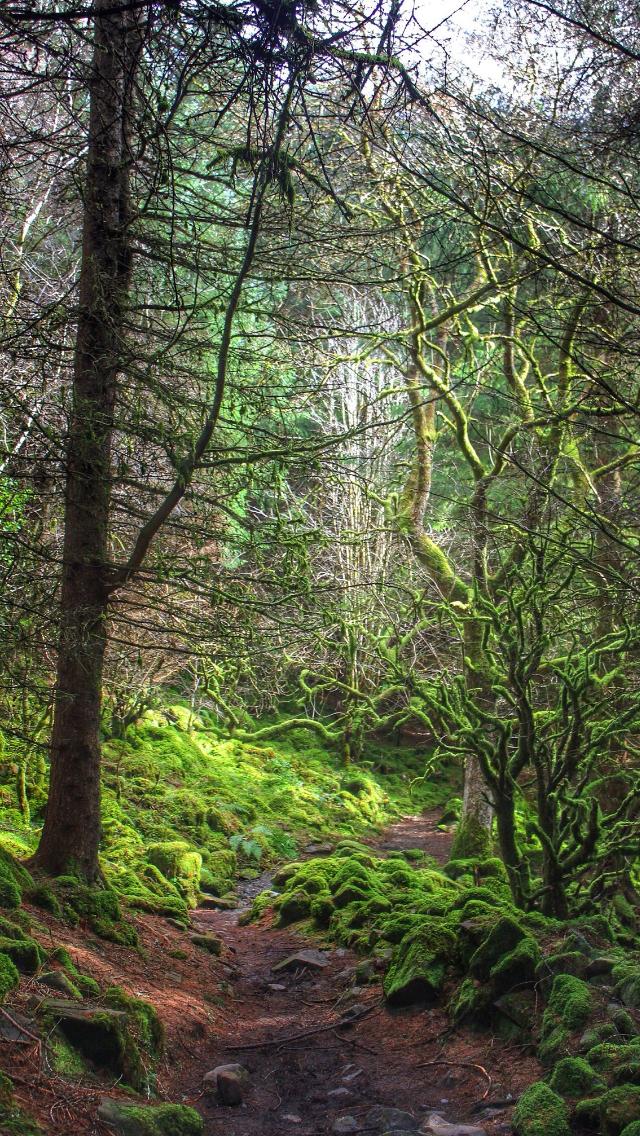 Evergreen  source Flickr.com