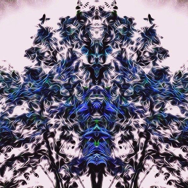 "@naturetrip's photo: ""#4:20 #art #artstudio #blender #edit #fadingnature #glitchmobinspired #marijuana #mirrorgram #mirrorgramprojects #nature  #naturetrip #plpix #snapseed #tangledfx #trippy #whatdoyousee #wiggteam"""
