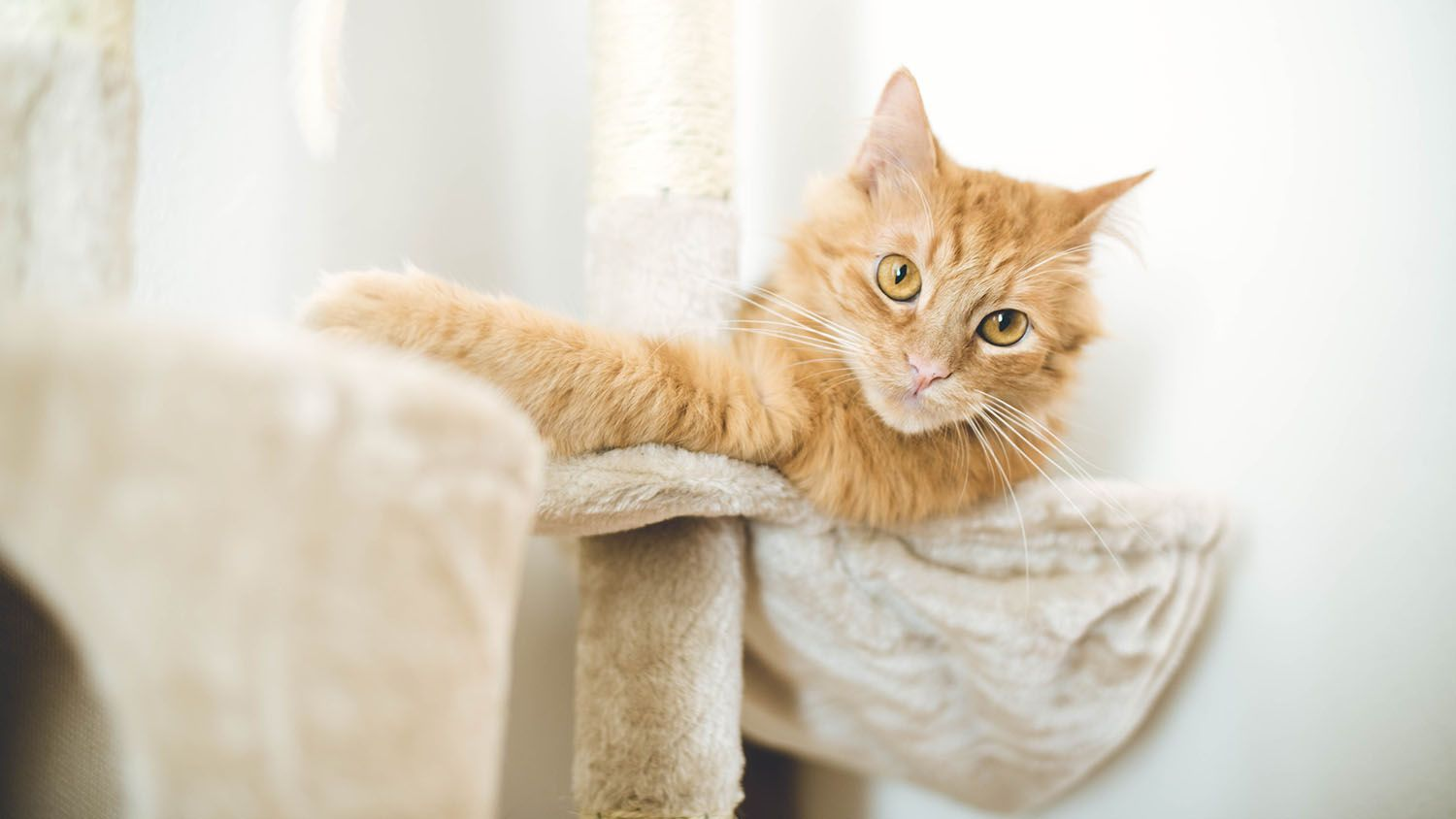 7 Of The Best Products To Protect Your Furniture From Your Cat S Claws In 2020 Best Cat Scratching Post Cat Claws Cats