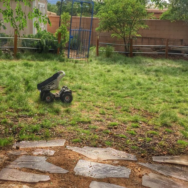 Why I Love These Grass Plugs Lawn Alternatives Grass Plugs High Country Gardens