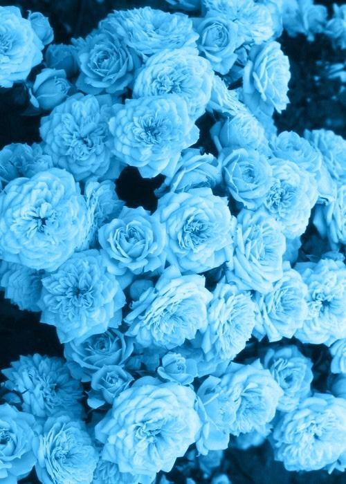 Pastele Tumblr Blue Aesthetic Pastel Flower Aesthetic