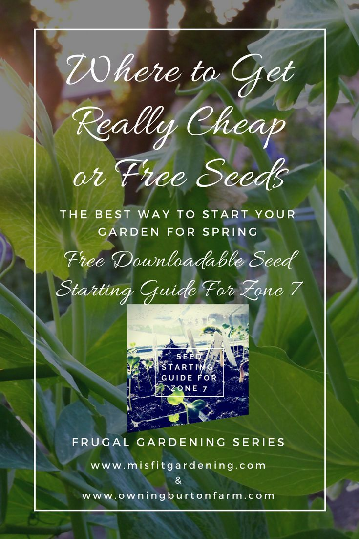 Where to find free or super cheap seeds to start your garden free where to find free or super cheap seeds to start your garden free downloadable seed izmirmasajfo