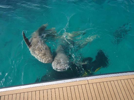 Lizard Island Resort Australia Resort All Inclusive
