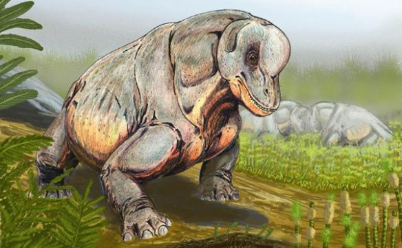 Resultado de imagen para phenacodontidae