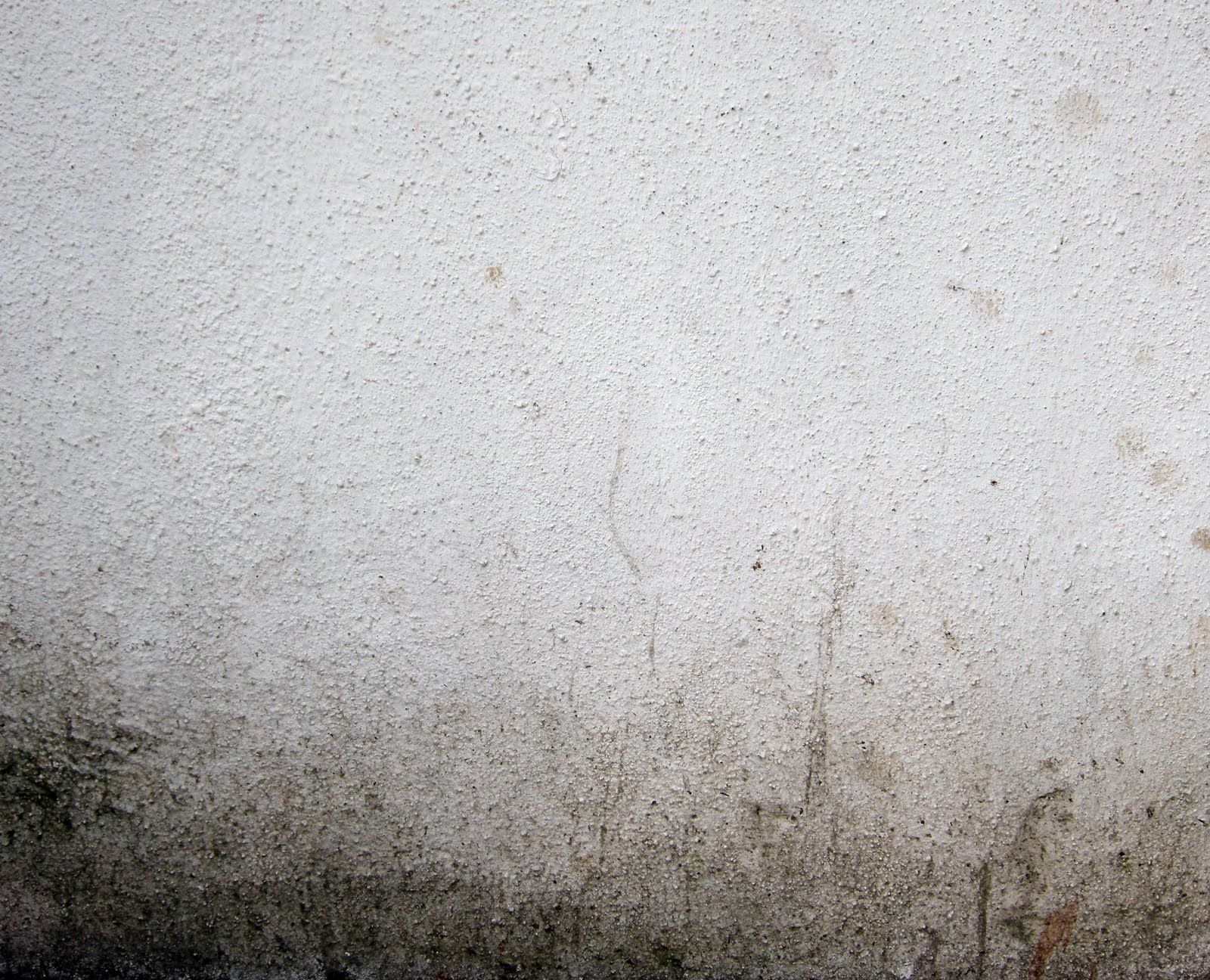Office Paint Dirty White Wall Texture Plaster And Stucco Wall Leaves