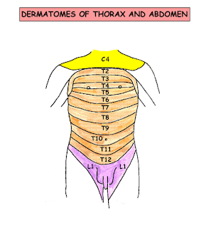 موقع الدكتور أحمد كلحى صور تشريح Anatomy Thorax Nerves Surface Anatomy Lymphatics Anatomy And Physiology Textbook Anatomy And Physiology Physiology