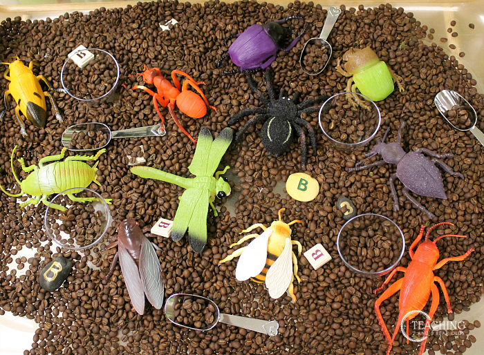 Setting Up the Classroom for the Bug Theme #preschoolclassroomsetup
