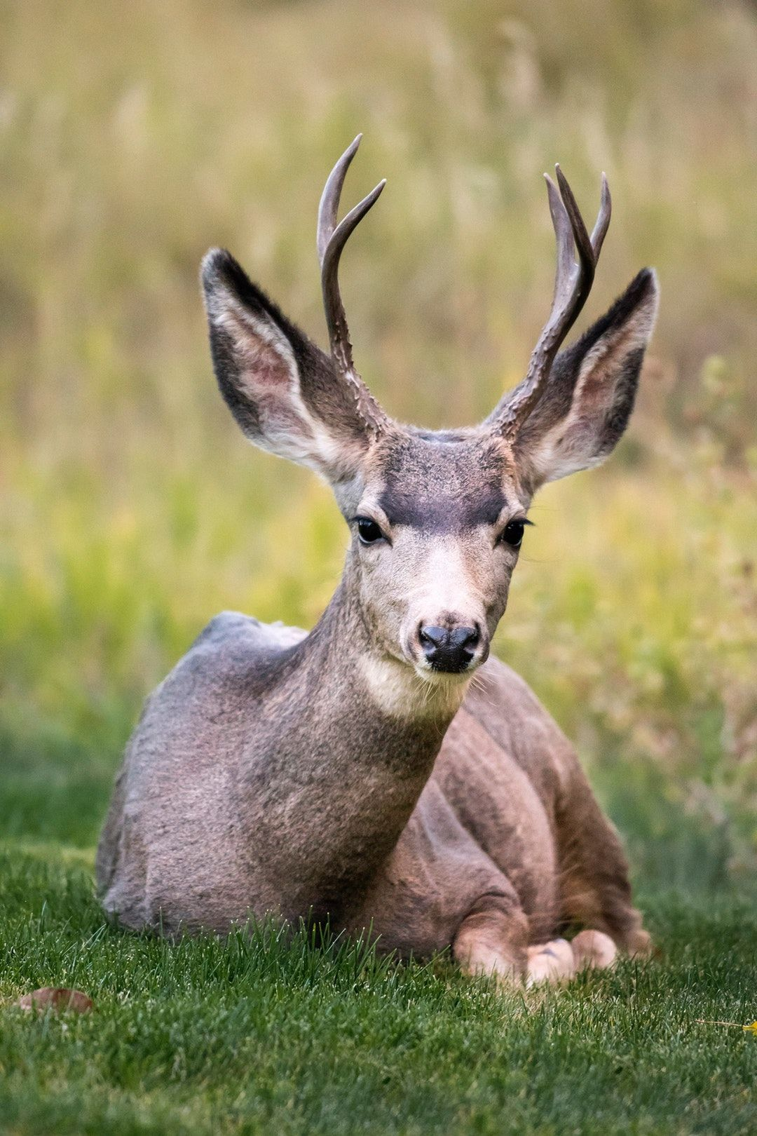 Download the perfect deer pictures. Find over 100+ of the