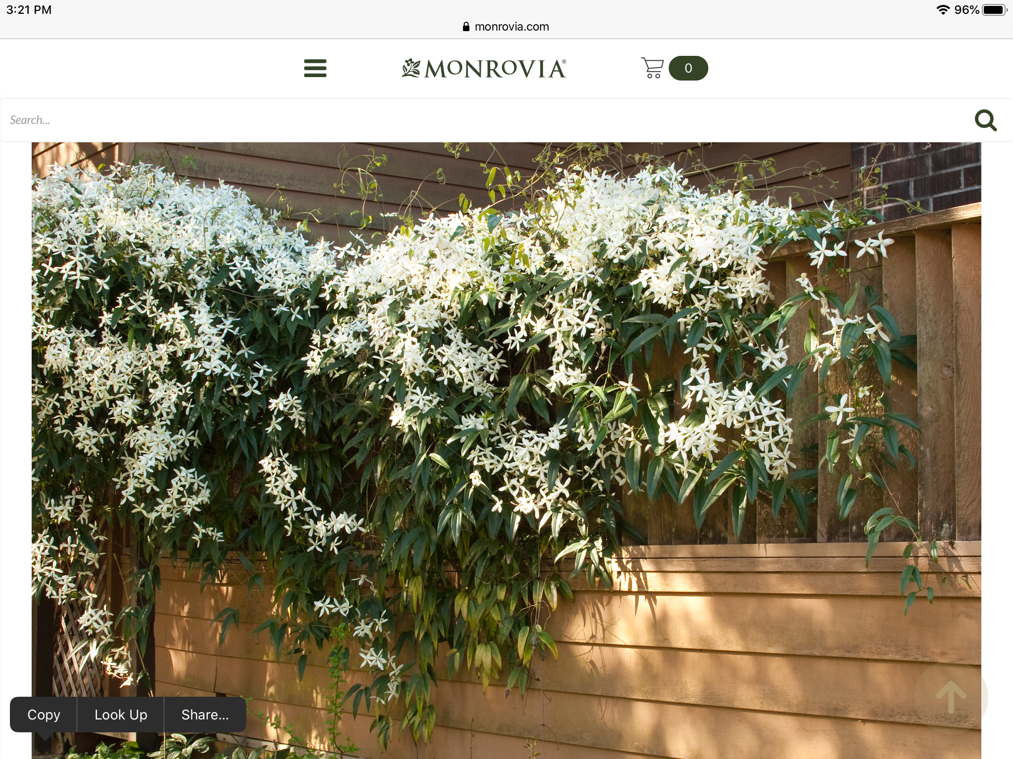 Evergreen Clematis Zone 7 9 In 2020