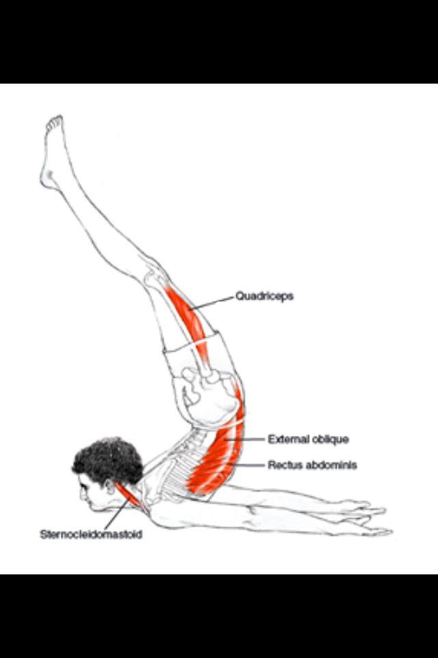 Amazing Yoga Anatomy Leslie Kaminoff Pattern - Anatomy Ideas ...
