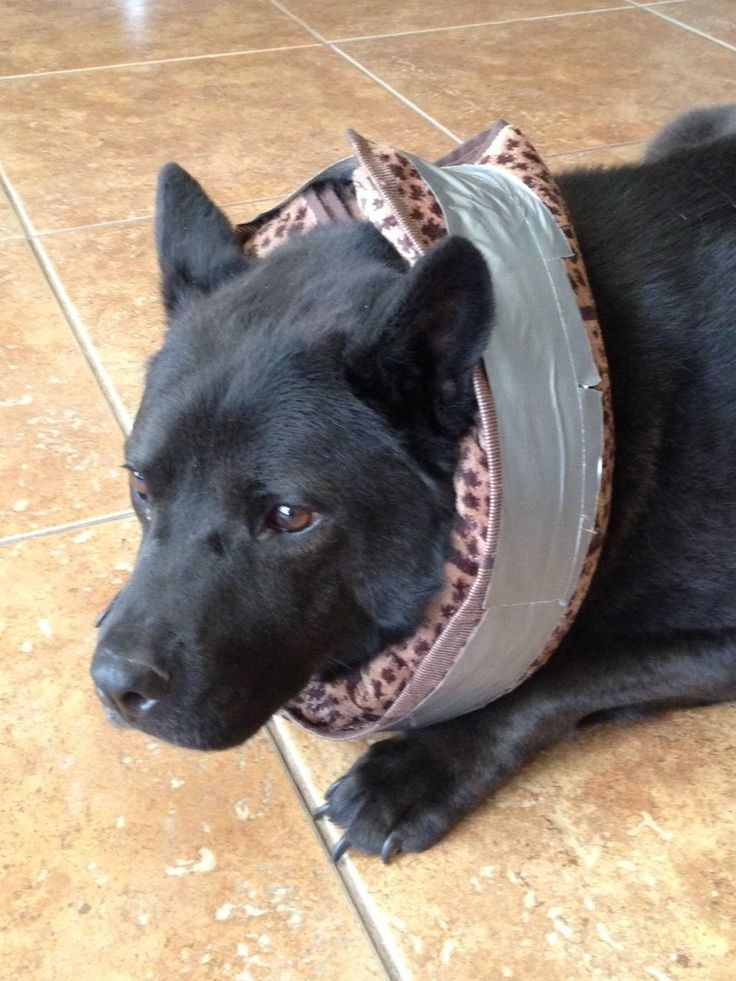 diy collar dogs for cone For Diy Tape, Explore Collar and