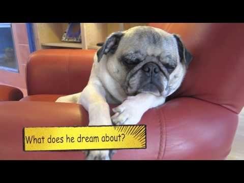 Loud Snoring Pug A Very Short Video Pugs Pug Love Pug Gifs
