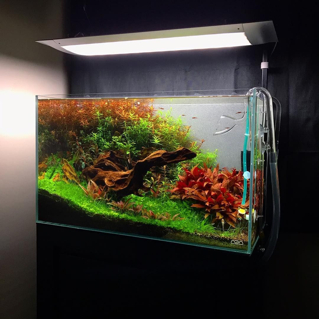 Ada 60p After 3 Months It S Very Colorfull Planted Tank Aquarium Landscape Aquascape Aquarium Aquascape