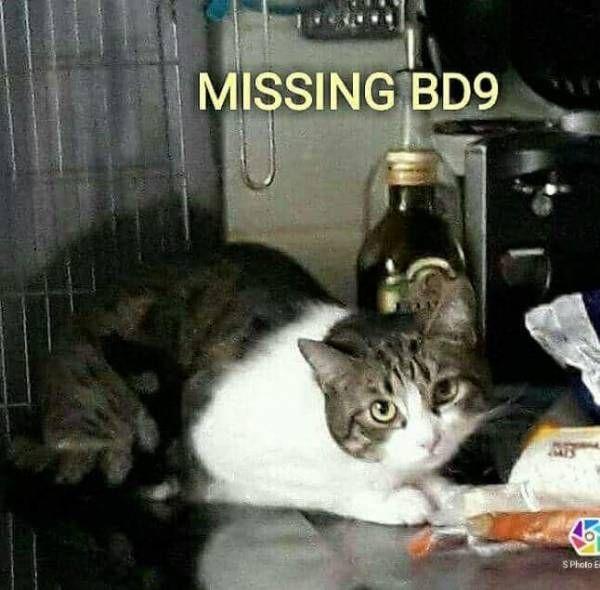 LOST CAT: 02/06/2017 - Bradford, West Yorkshire, England, United Kingdom. Ref#: L31828 - #CritterAlert #LostPet #LostCat #MissingCat