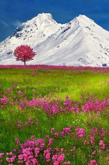 Alps, Switserland