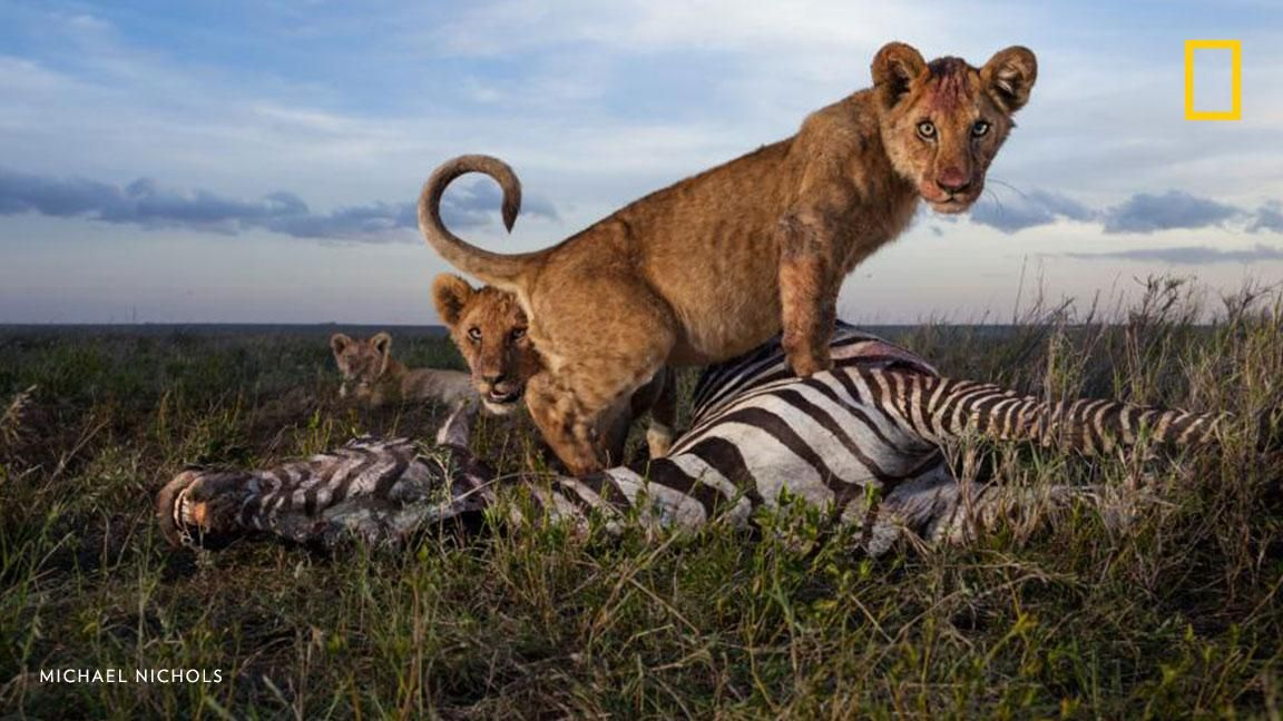 [ARTICLE] @NatGeoPhotos : View 14 incredible photos of Africas top predators in action: https://t.co/ASoc5Aymla https://t.co/mxR3OaKKge