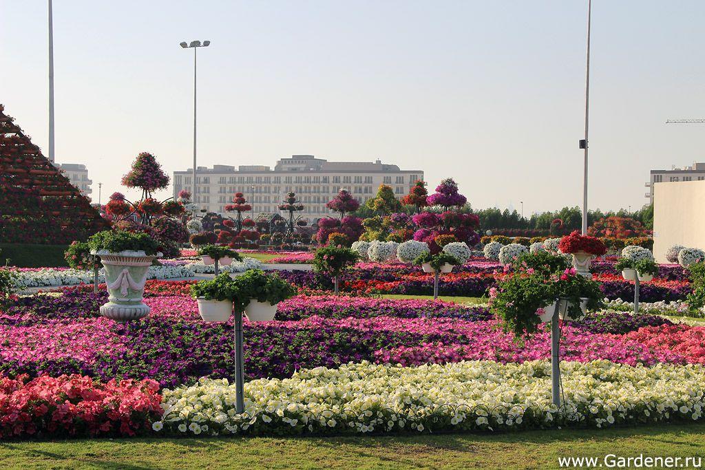 """Dubai Miracle Garden (""""Miracle Garden"""" in Dubai"""