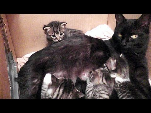 She's Having A Conversation With Her Kittens, But Just ...
