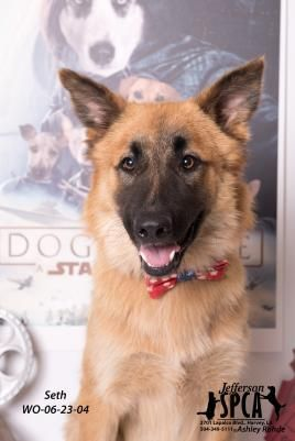 Adopt Dro On Dogs Shelter Dogs Rescue Dogs