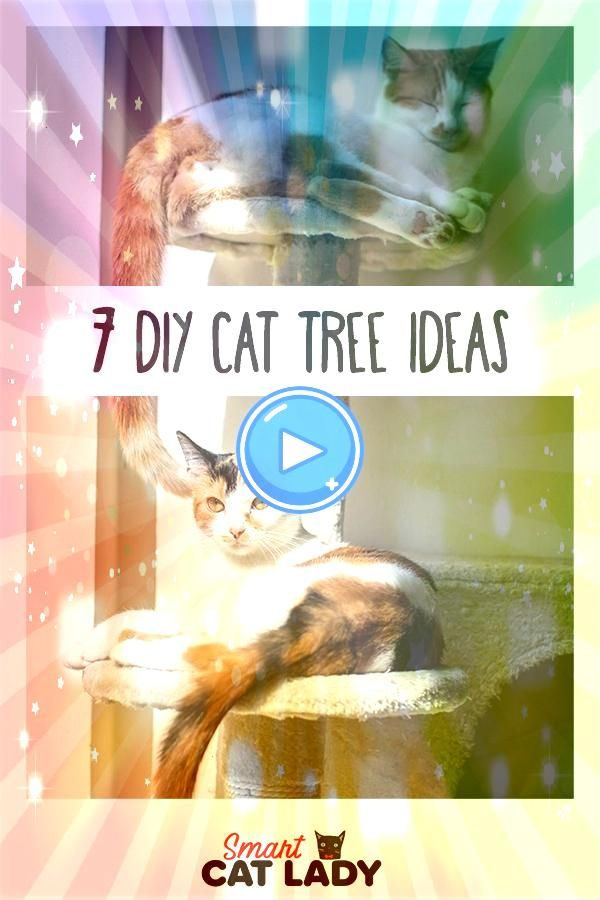 you have plans to make your own homemade cat tree Here are some DIY cat tree ideas Do you have plans to make your own homemade cat tree Here are some DIY cat tree ideas F...