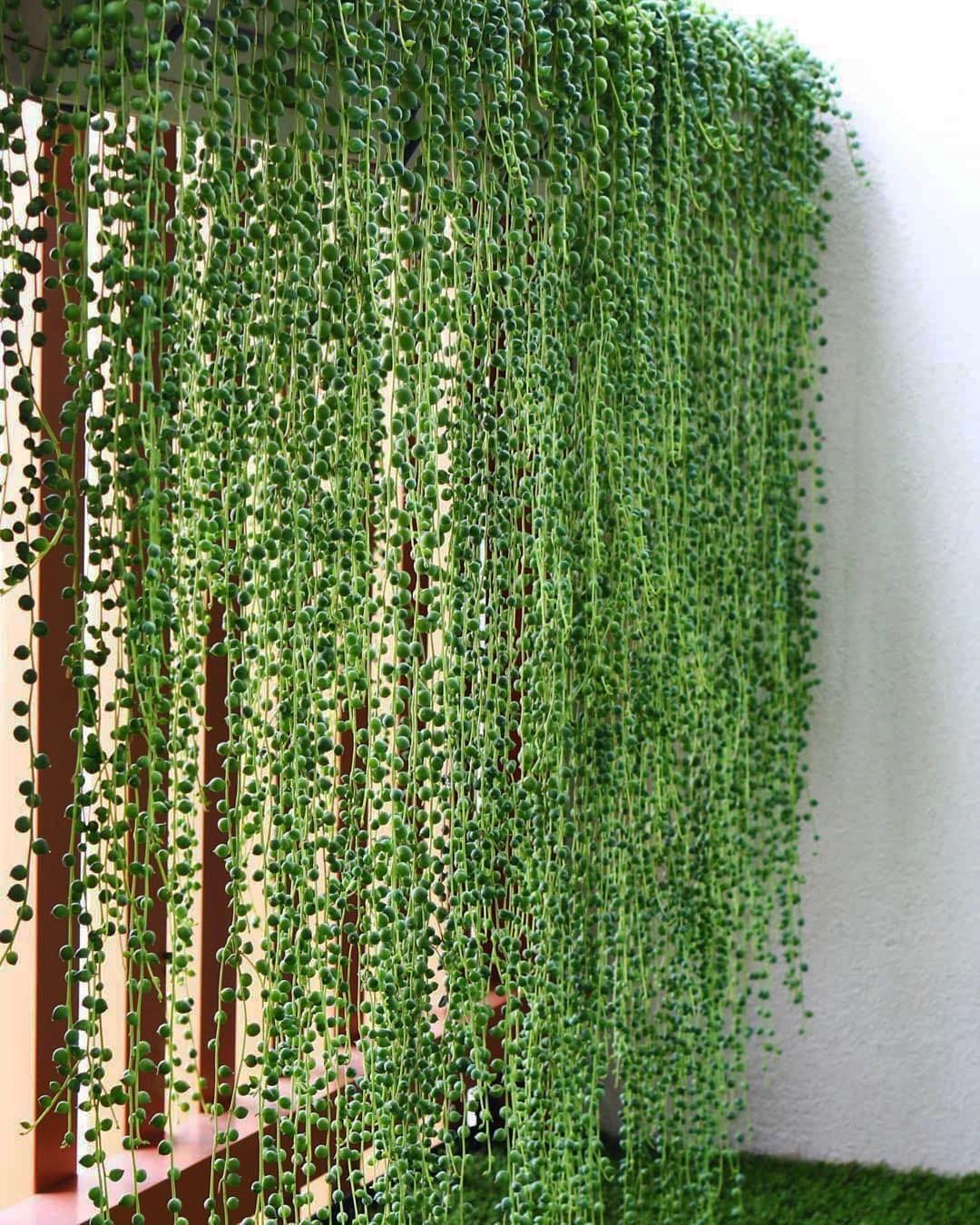 Outstanding Balcony Garden Ideas Screen Plants Balcony Plants