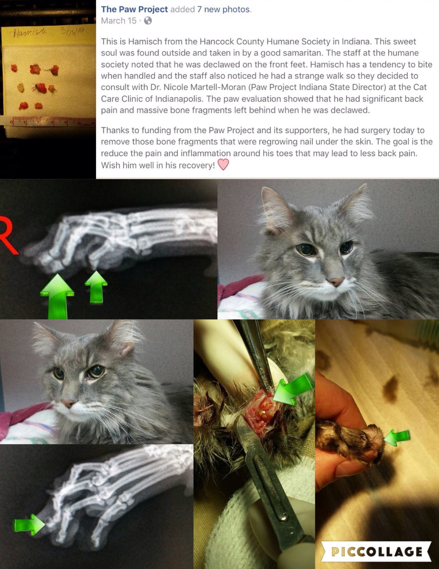 ‪Learn how to repair botched declawed paws! vetmed