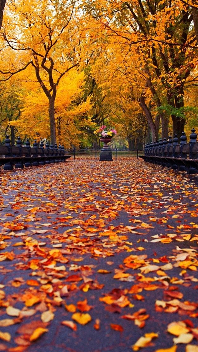 Autumn In Central Park Nyc Fall Wallpaper Iphone Wallpaper Fall Nature Photos