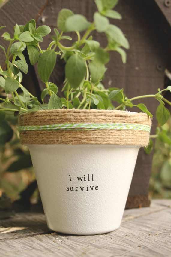 4 Quot I Will Survive 187 Plant Cactus Succulent Indoor And
