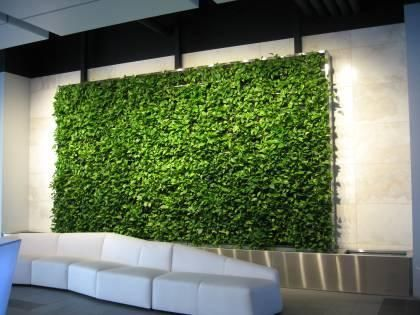 Why Every Home And Office Needs A Green Wall Living Green Walls Green Wall Vertical Green Wall