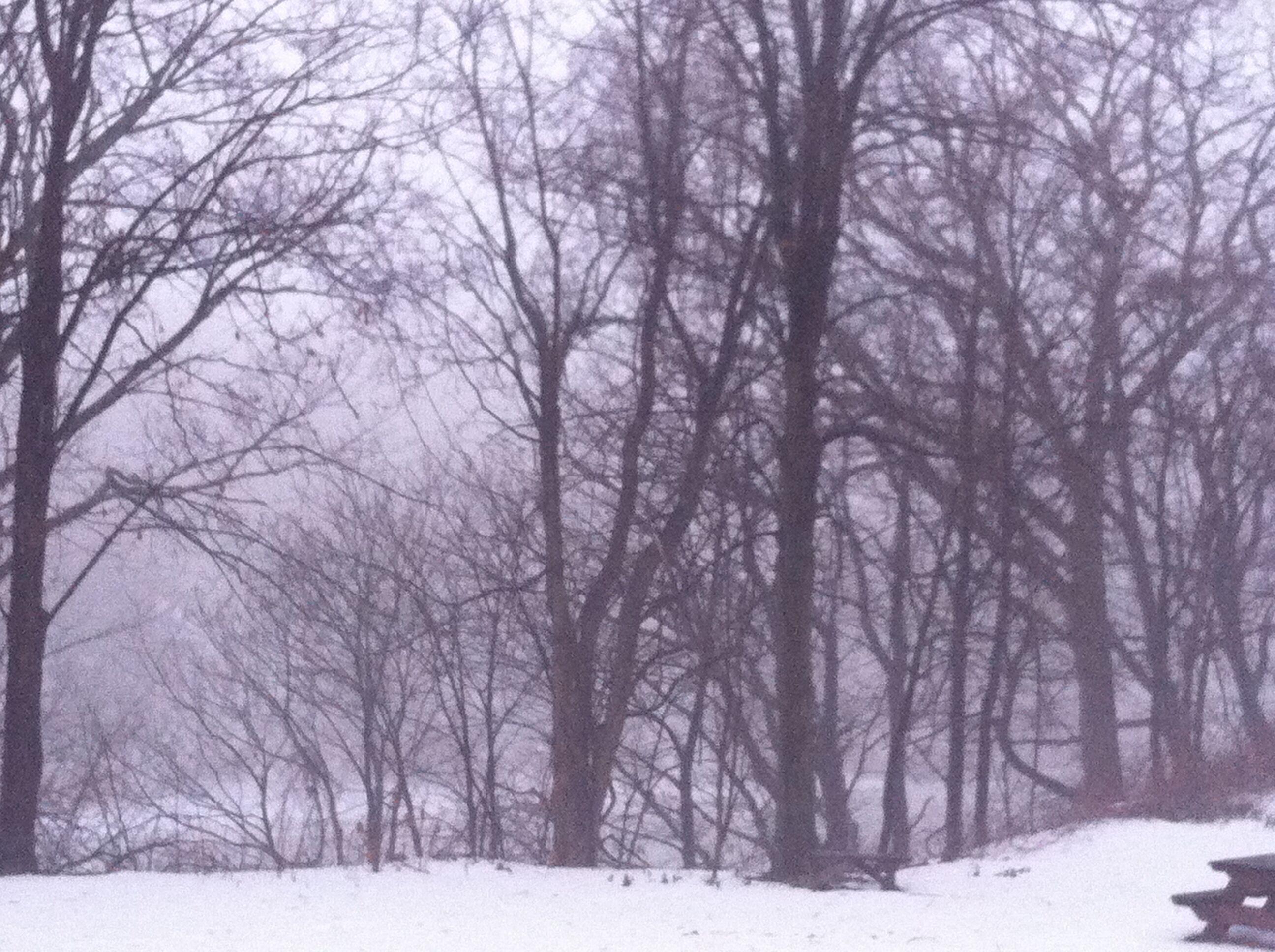Snowy NY