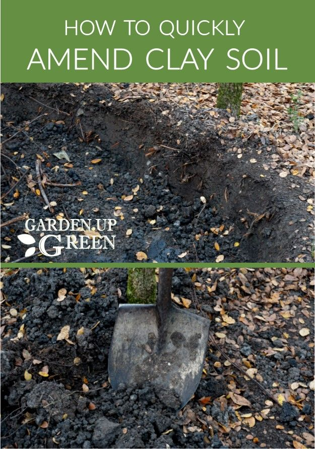 Incroyable How To Quickly Amend Clay Soil In Just A Few Months | Gardening 101 |  Pinterest | Clay Soil, Gardens And Composting