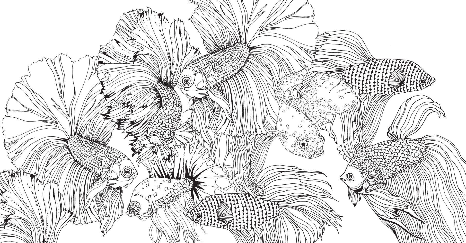 geheimnisvolle unterwasserwelt  geheimnisvoll wenn du