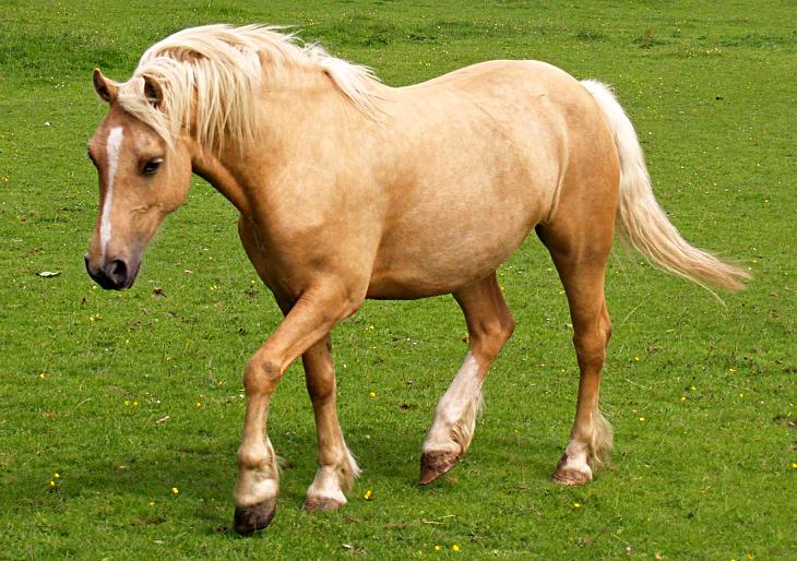 11+ Pony types information