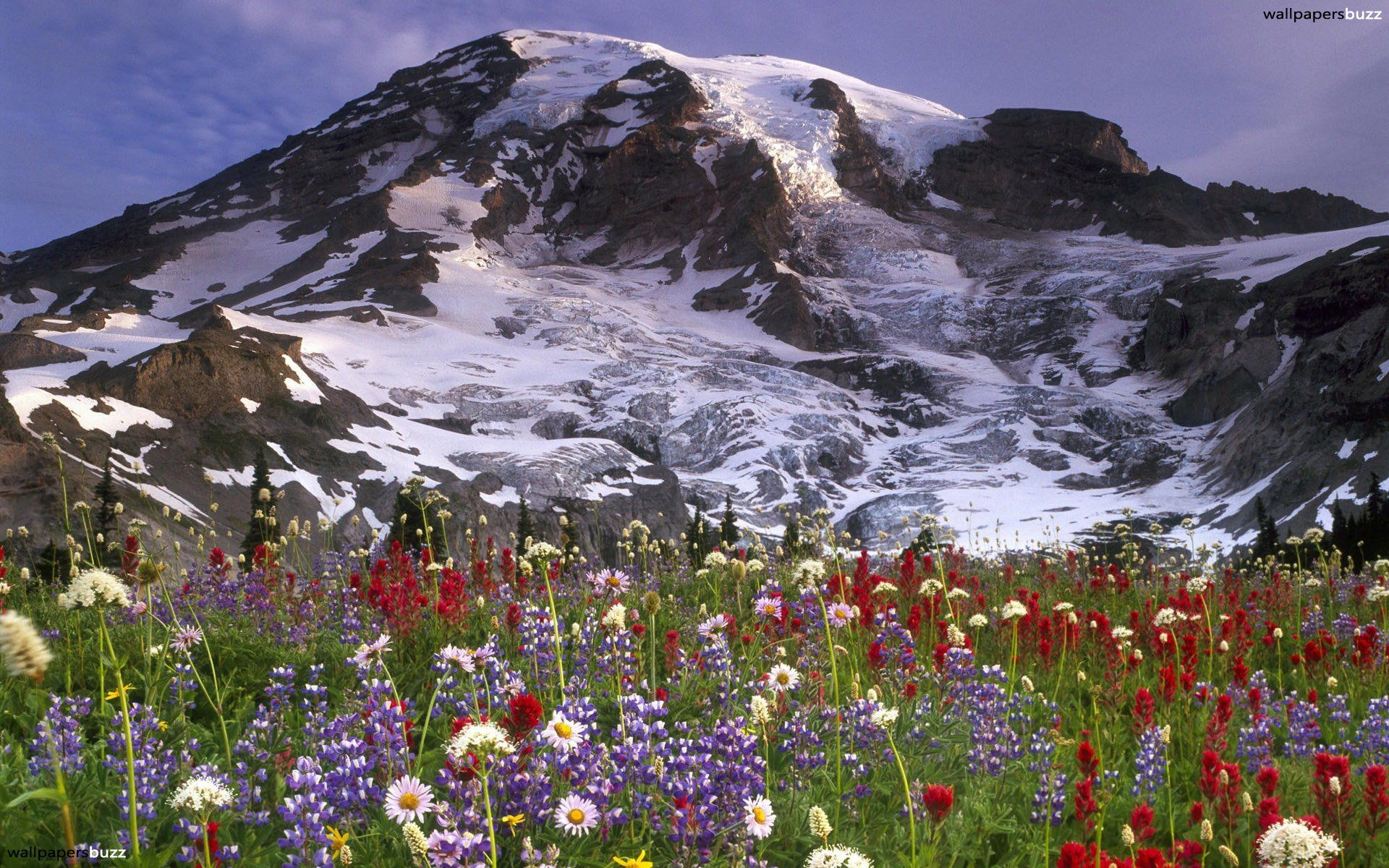 mountain flowers ! | few thoughts | pinterest | flowers