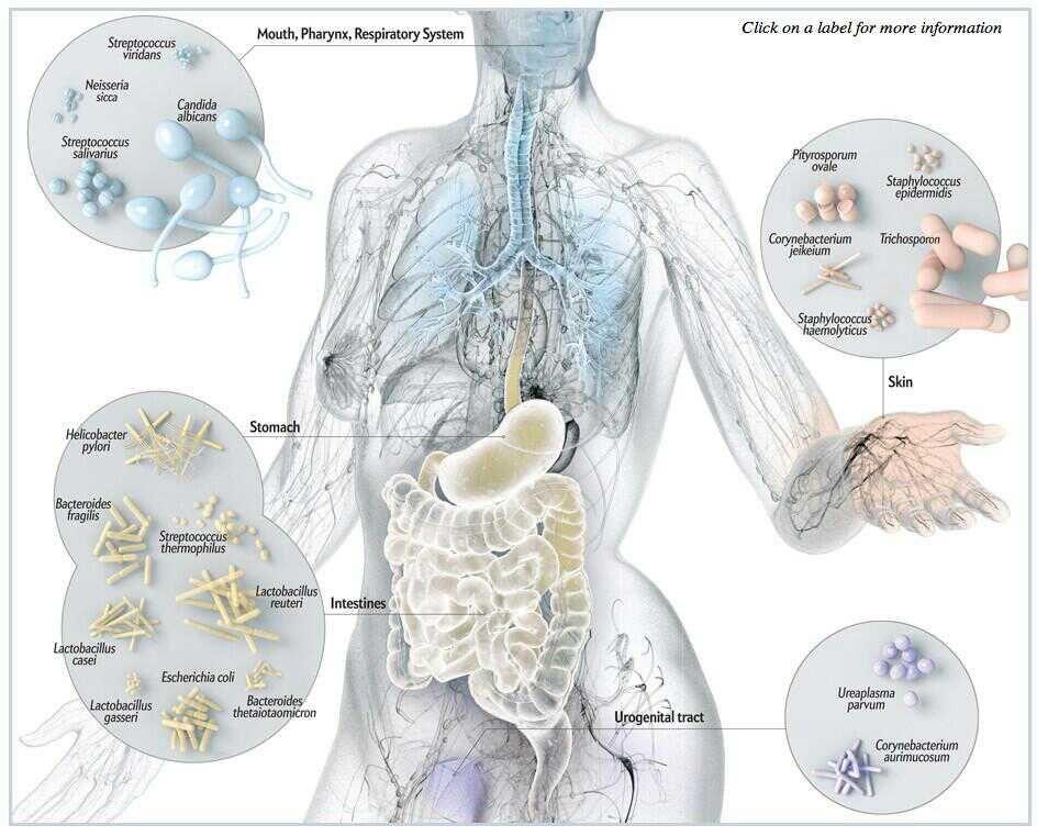 Los microorganismos de nuestro cuerpo. @microBIOblog | Mis frikadas ...