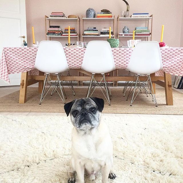 What if your living room digs were pup-friendly? Katie, @katiearmour, pug mom to Alfred, saving artwork and interiors on Pinterest⠀