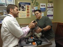 5 Whys Of Pet Wellness Visits Pet Wellness Veterinary Care Pets