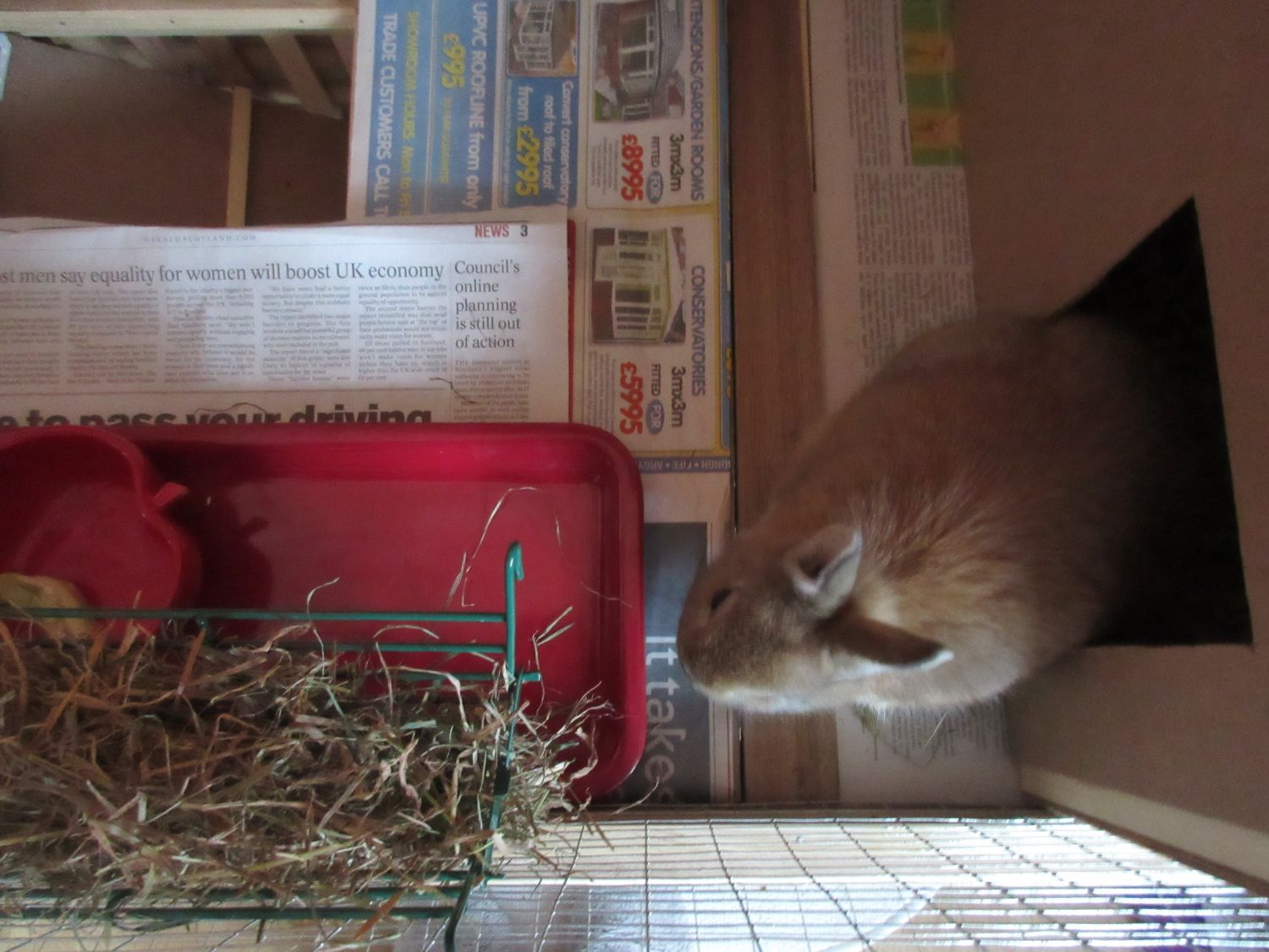 How to make a bunny palace ikea hack rabbit cage in 2020