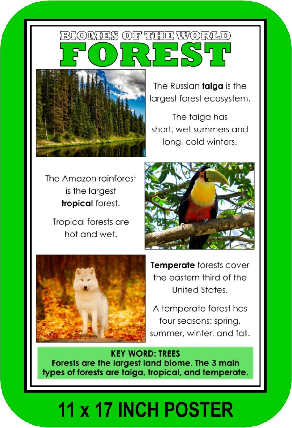 Biomes Of The World Poster Set Biomes Ecosystems Projects