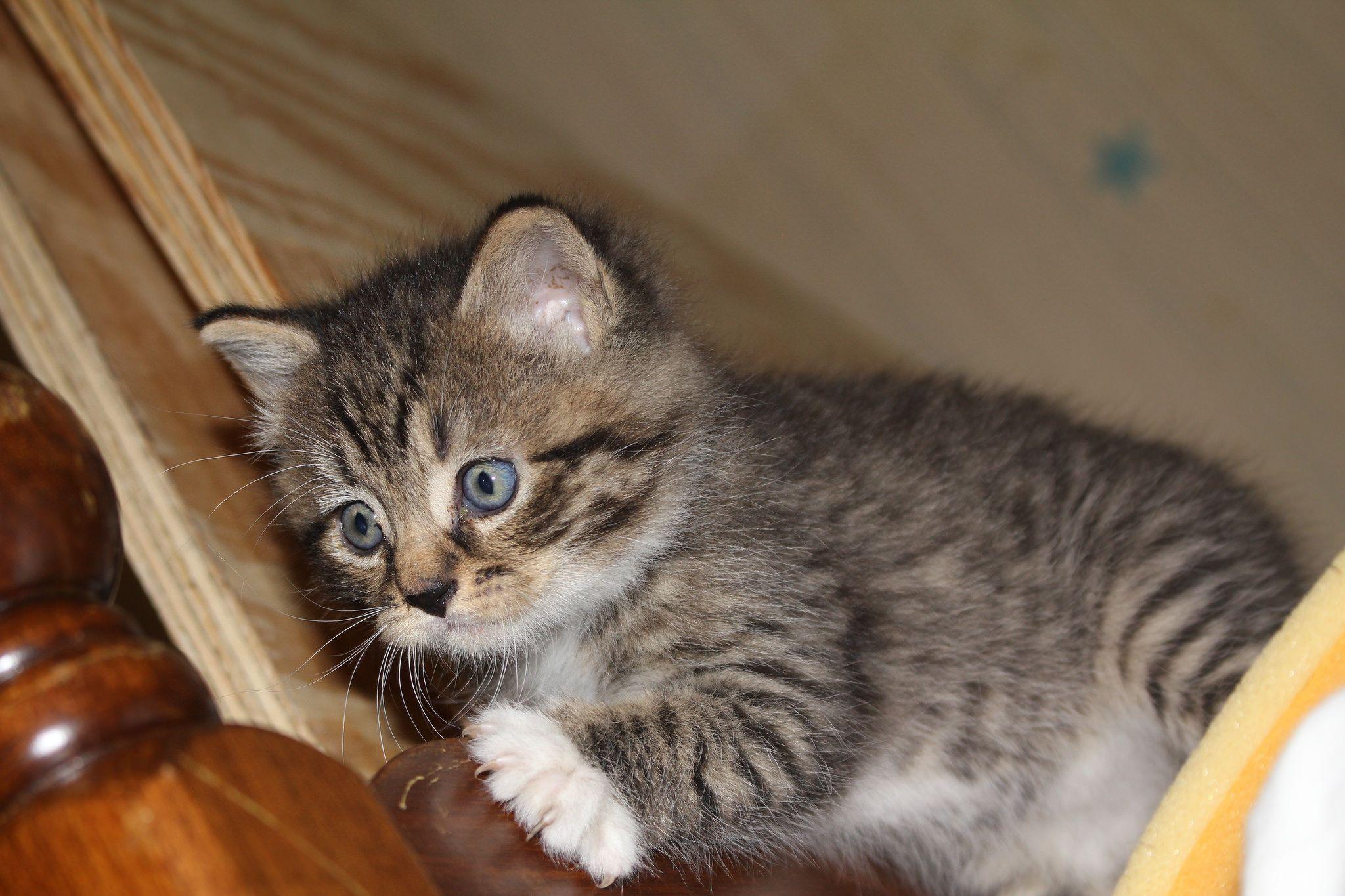 Cat Firecracker Liveleak