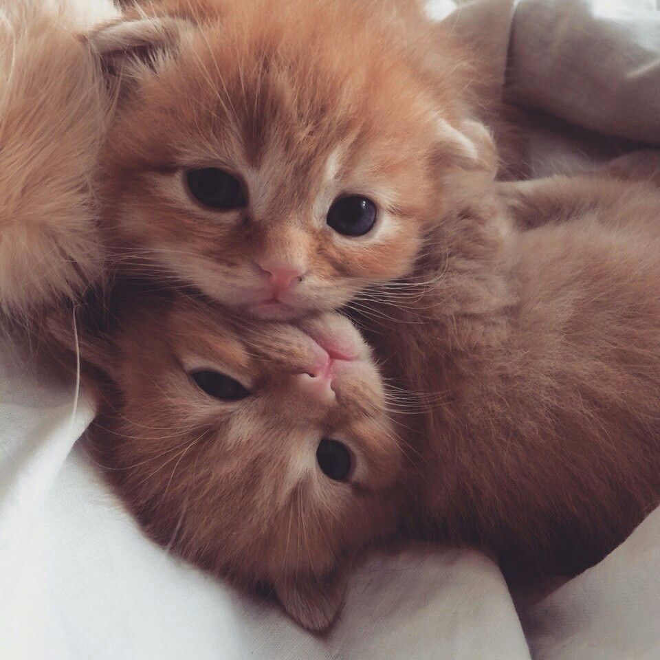 Baby Ginger Love Kittens Cutest Baby Cats Pretty Cats