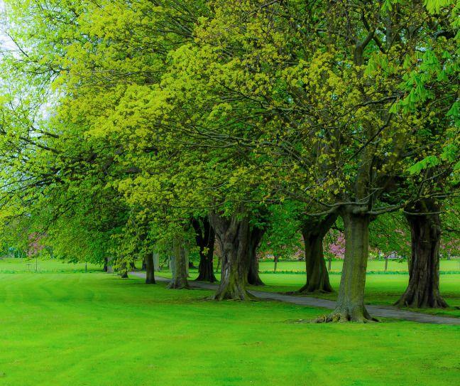 Trees Need Love Too!