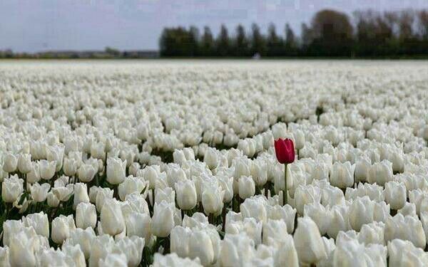 Be different,you will always stand out.
