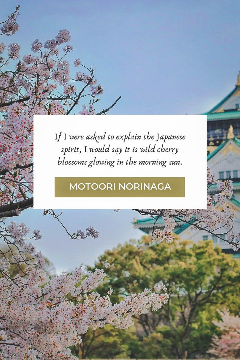 Cherry Blossom Quotes About Life And Renewal In 2021 Cherry Blossom Quotes Blossom Quotes Cherry Blossom