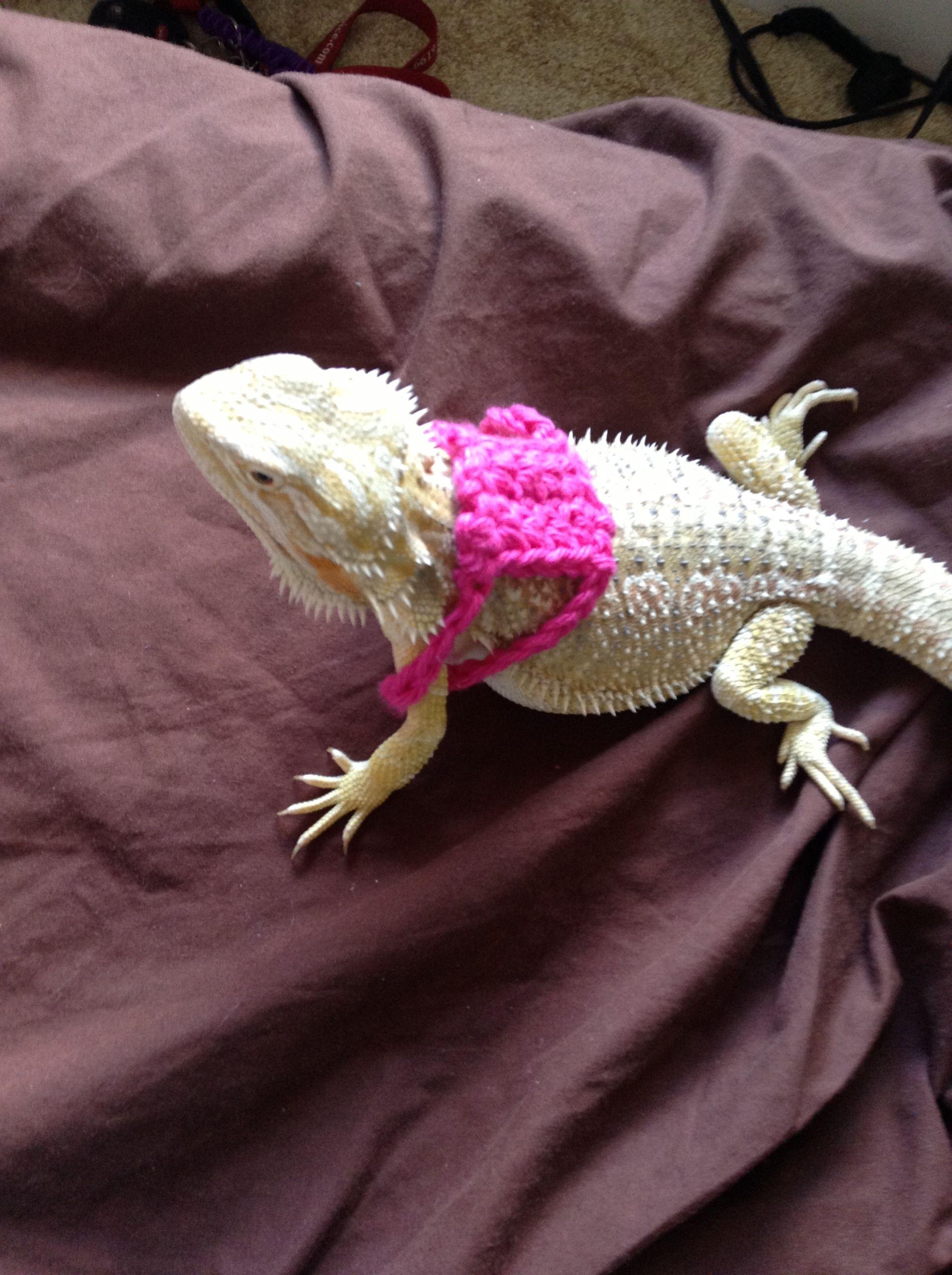 Crochet bearded dragon diy reptile harness (:   Bearded Dragon Pet