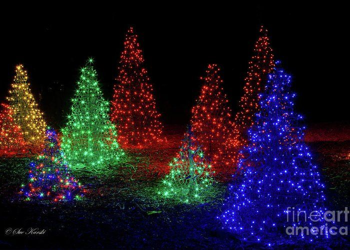 Colorful Christmas Trees Greeting Card For Sale By Sue Karski With Images Colorful Christmas Tree Yard Lights Christmas Winter Christmas